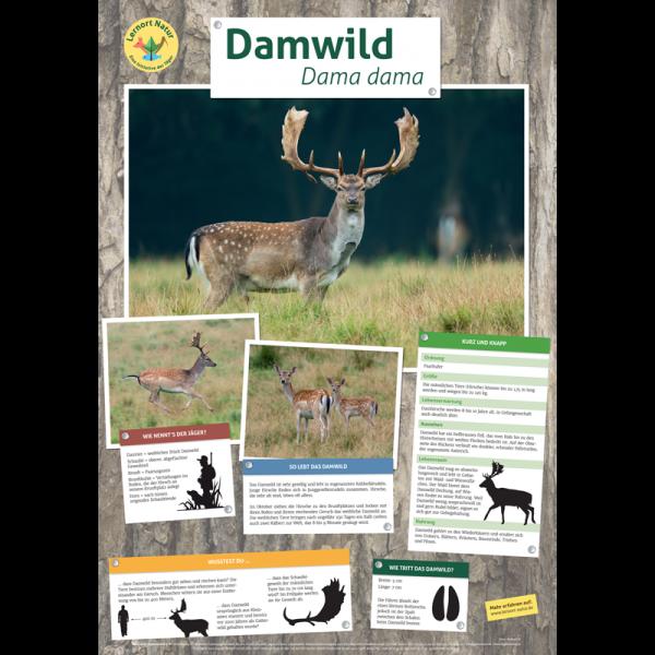 Lernort Natur-Tierposter Damwild