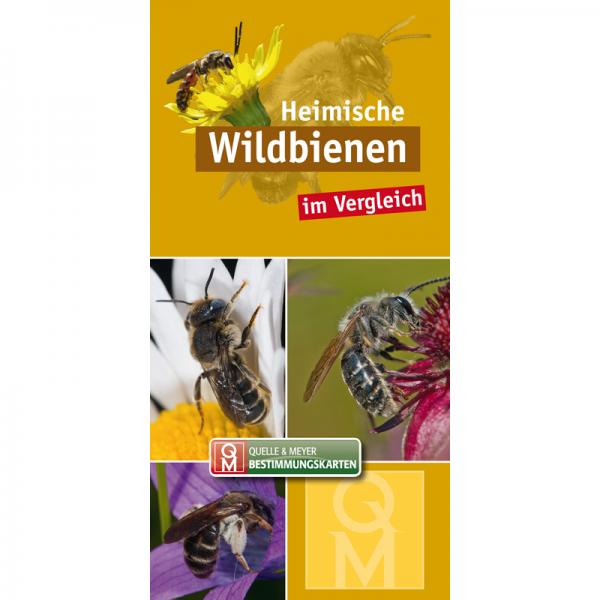 """Bestimmungskarte """"Heimische Wildbienen im Vergleich"""""""