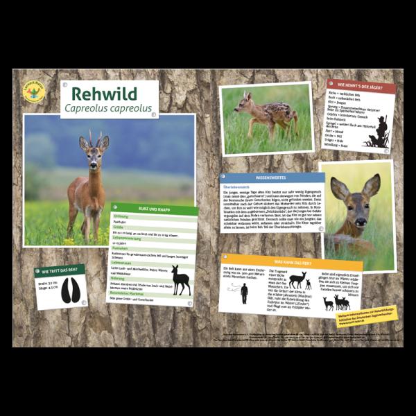 Lernort Natur-Tiertafel DIN A3 Rehwild