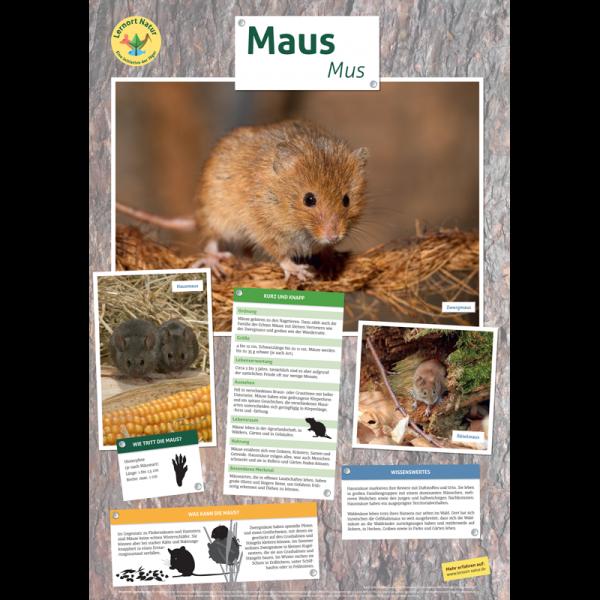 Lernort Natur-Tierposter Maus