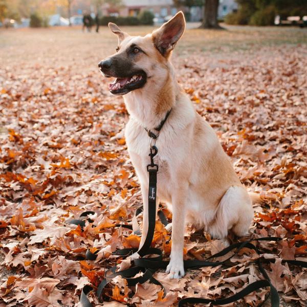 Rudelkönig Hunde-Schleppleine mit Griffpolsterung (10m)